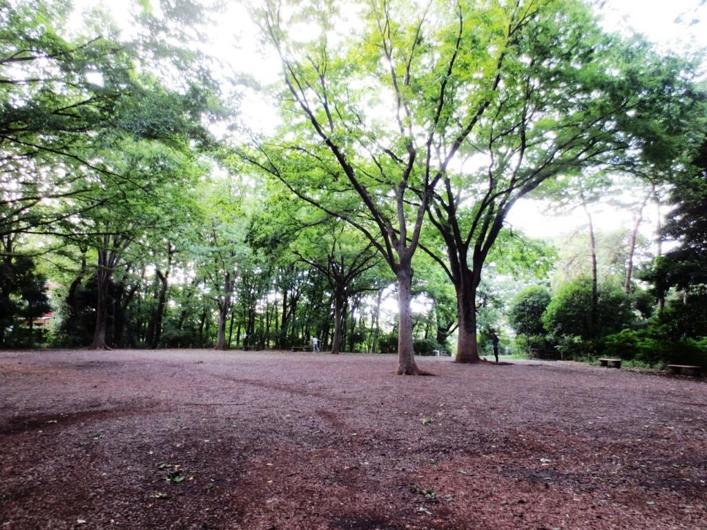 木と話す010