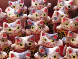 張子猫IMGP4561