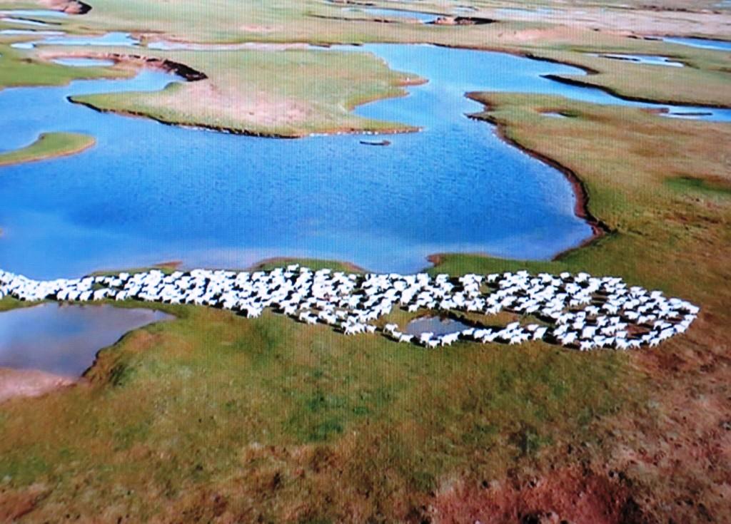 羊の群れ011